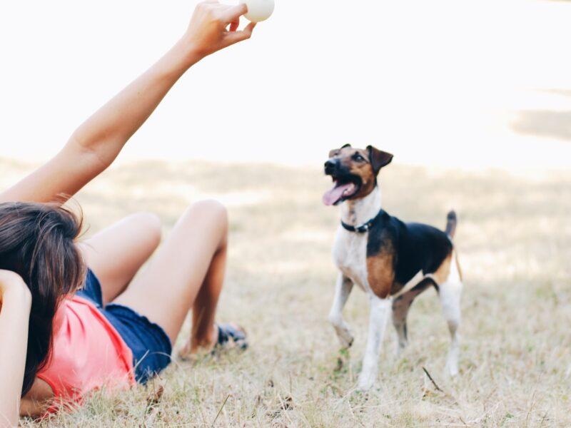 Você sabe o motivo do seu cachorro abanar o rabo?